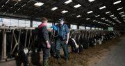 Profesjonalna ultrasonografia bydła