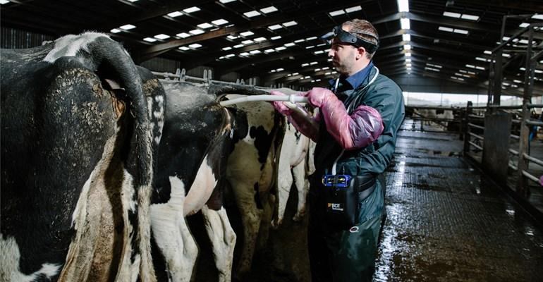Ultrasonograf do badań rektalnych USG Bydła